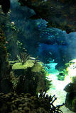 Pacific ocean underwater sea life Stock Image