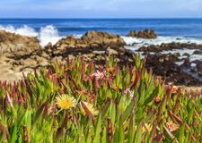 Free Pacific Ocean Waves Crashing On The Cliffs Of The Rugged Northern California Coast In Monterey, Flowers In Foreground Royalty Free Stock Photo - 174170545