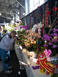 Photographer at the Orchid Exhibition. Pacific Orchid Exposition that took place this year at Fort Mason in San Francisco attracted  many orchid lovers and Stock Photos