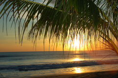 Pacific Palm. This sunset was taken in Nicaragua, the operfect vaction get-a-way stock images