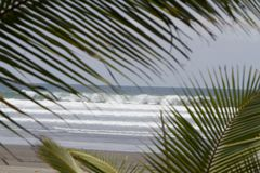 Pacific and Palms Royalty Free Stock Images