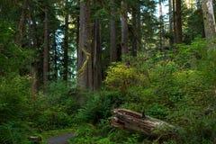 Pacific rainforest Stock Photo