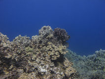 Pacific reef Royalty Free Stock Images