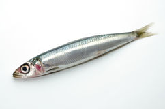 Pacific round herring stock images