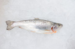 Pacific salmon on ice Royalty Free Stock Images