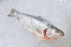 Pacific salmon on ice Stock Photos