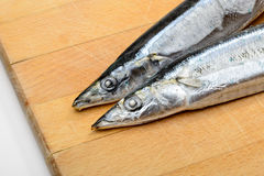 Pacific Saury Stock Images