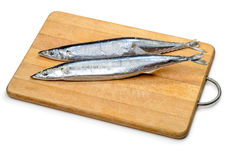 Pacific Saury Stock Photography
