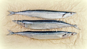 Pacific saury on the paper. Pacific saury on the light crumpled paper Stock Photography