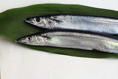 Pacific saury. Salt is saury. You eat baked Stock Images