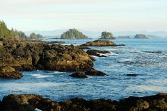 Pacific shoreline. View of pacific shoreline at ucluelet, pacific rim national park, british columbia Stock Image