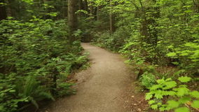 Pacific Spirit Park Trail, Vancouver. A forest path through the woods in Pacific Spirit Park. Vancouver, British Columbia, Canada stock footage