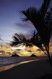 Pacific sunrise in Hawaii Stock Photography