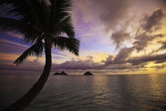 Pacific sunrise in hawaii Royalty Free Stock Images