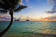 Pacific sunrise with palm royalty free stock images