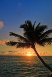 Pacific sunrise with palm Stock Photo