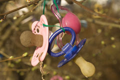 Pacifiers Royalty Free Stock Images