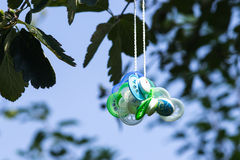 Pacifiers in a tree Stock Photography