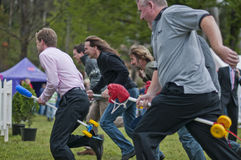 In the pack. MARYSVILLE, VICTORIA, AUSTRALIA - November 2: A group of men compete for first place in a hobby horse race at the Marysville Sparkling Wine Festival stock photo