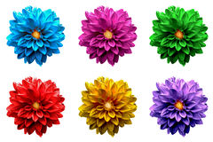 Pack of colored surreal dahlia flowers macro isolated Stock Images