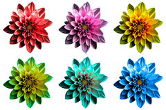 Pack of colored Surreal dark chrome dahila flowers macro isolated Royalty Free Stock Images