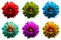 Pack of colored surreal wet dahila flowers macro isolated Stock Photography