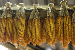 A pack of Corns Royalty Free Stock Images