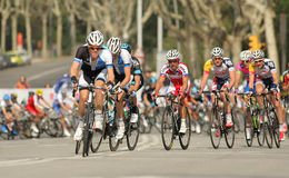 Pack of the cyclists Stock Images