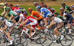 Pack of the cyclists ride during the Tour of Catalonia Royalty Free Stock Photography
