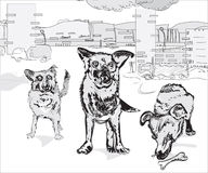 Pack of Dogs. Pack of funny dogs against the urban background, illustration over white Stock Image