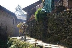 Pack donkey walks through village Royalty Free Stock Photos