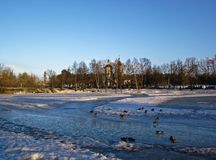 Pack of ducks on the ice pond. Moscow Royalty Free Stock Photos