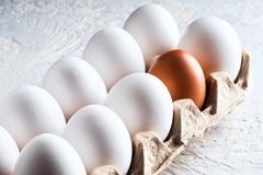 Pack egg white and one beige brown Concept harmful unnatural different other racism. Nationalism war opposition resistance Royalty Free Stock Photography