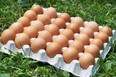 Pack of eggs Stock Photo