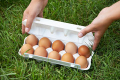 Pack of eggs on grass Royalty Free Stock Photos
