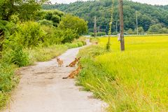 Pack of four brown dogs on small roadway Stock Photo