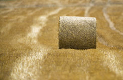 Pack of grain Royalty Free Stock Photography
