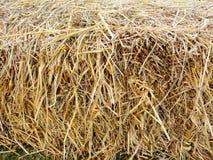 Pack of hay closeup. Royalty Free Stock Photo