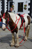 Pack Horse Royalty Free Stock Photo