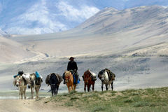 Pack horses and driver ride on the high mountains of the desert: off-road, horses go in row, the person`s face is covered with a h Royalty Free Stock Photography