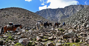 Pack horses in the mountains Royalty Free Stock Images