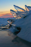 Pack ice fish jumps out of snowdrifts. Stock Photography