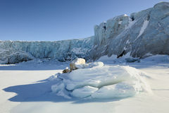 Pack ice and glacier. Pack ice in front of glacier ending in sea Stock Images