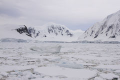 Pack ice with icebergs along Antarctic coastline. Field of pack ice with icebergs hugging shores of Antarctic Peninsula Royalty Free Stock Photos