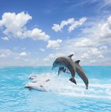 Pack of jumping dolphins stock photos
