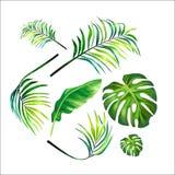 Leaf Vector Design vector illustration