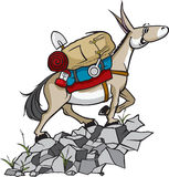 Pack Mule. A cartoon Pack Mule with gear. Vector and high resolution jpeg files available Stock Image