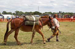 Pack Mule Royalty Free Stock Photo