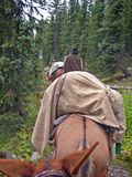 Pack mule train for some hunters in the Rocky Mountains stock photo