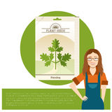 Pack of Parsley seeds icon Royalty Free Stock Photos